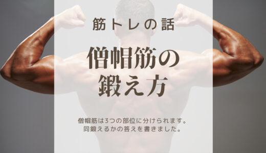 【僧帽筋解説】モテ筋の一つ僧帽筋の正しい鍛え方を解説